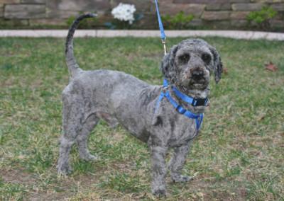 Cinder, Adoptable Dog K9 Connections Pet Adoption