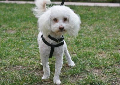 Jojo, Adoptable Dog K9 Connections Pet Adoption
