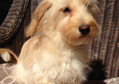 Manny, Adoptable Dog K9 Connections Pet Adoption