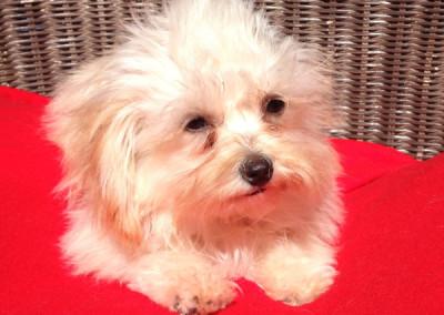Meeko, Adoptable Dog K9 Connections Pet Adoption