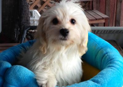 Milo, Adoptable Dog K9 Connections Pet Adoption