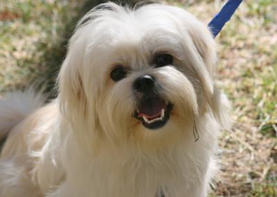 Bailey, Adoptable Dog K9 Connections Pet Adoption