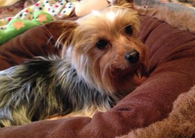 K9 Connections Pet Adoption Emma