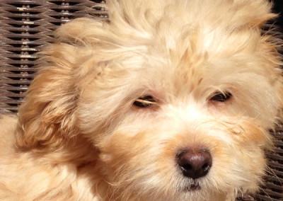 K9 Connections Pet Adoption Miles