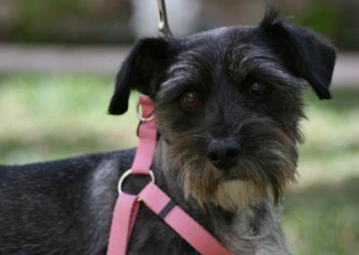K9 Connections Pet Adoption