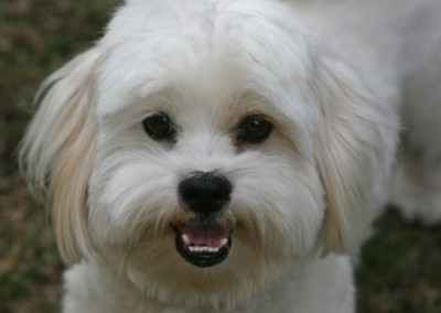 K9 Connections Pet Adoption Hooch