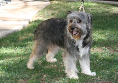 K9 Connections Pet Adoption Tara