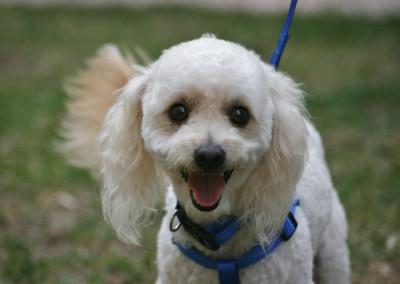 K9 Connections Pet Adoption Tipper