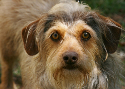 K9 Connection Pet Adoption and Rehoming Brandy